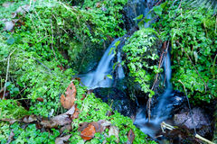 Little mountain stream and greens Royalty Free Stock Image