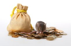 Little mouse. Sitting on a heap of coins on a white background Royalty Free Stock Photography