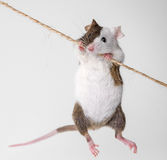 Little mouse Stock Photo
