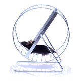 Little mouse on an exercise wheel royalty free stock photo