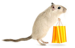 Little mouse goes shopping Stock Photography