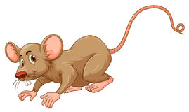 Little mouse with silly face Stock Photos