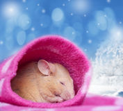Little mouse sleeping in a sleeve Stock Images