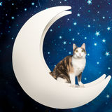 Little multicolored domestic cat at moon in starry background. Sweet multicolored domestic cat sitting in the moon with starry blue background Stock Photo