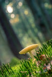 Little mushroom in a fairy tale forest Stock Images