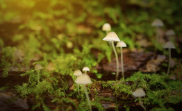 Little mushroom family in the forest Stock Photos