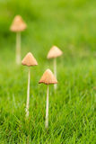 Little mushroom. Some little mushroom on the green grass Stock Photography
