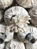 A little mushrooms. Royalty Free Stock Photography