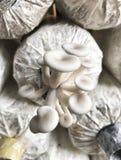 A little mushrooms. Stock Photo