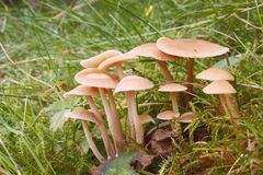 Little mushrooms in grass. Little mushrooms in moss and grass Stock Image