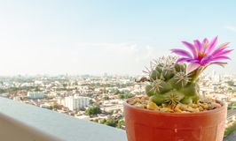 Little Nature in The Big City with Clear Sky Template Royalty Free Stock Image