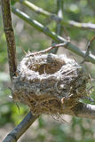A little nest on a branch Stock Photos