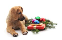 Little New Year puppy with toys and gifts. Little New Year puppy with toys and gifts on a white background royalty free stock image
