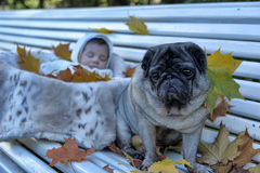 Little newborn baby and pug. For a walk in the autumn Royalty Free Stock Photo