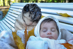 Little newborn baby and pug Royalty Free Stock Images