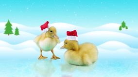 Little newborn ducklings in Santa hats, standing on the ice. Winter day background with snowfall, copy space version for keying in portfolio stock footage
