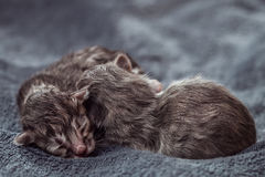 Little newborn kittens lie on a blanket. Stock Photography