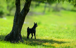 Little newborn lamb in springtime Royalty Free Stock Photography