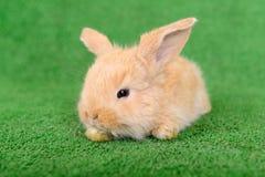 Little newborn rabbit Stock Photo