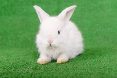 Little newborn rabbit Stock Photos