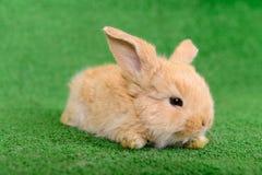 Little newborn rabbit Royalty Free Stock Photos