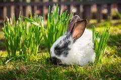 Little nice rabbit. Stock Photography
