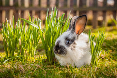 Little nice rabbit. Stock Images