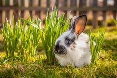 Little nice rabbit. Stock Images