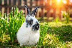 Little nice rabbit on green grass. Stock Photography