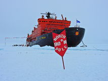 is little norr pingvinpol för natt Fotografering för Bildbyråer