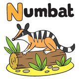 Little numbat for ABC. Alphabet N. Children  illustration of little funny numbat on a log. Alphabet N Stock Photos