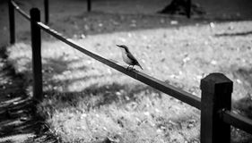 Little nuthatch sits on wooden railing Stock Photo