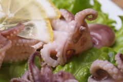 Little octopus with lemon slices and lettuce macro Stock Photo