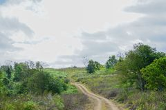 Little Off-road in the forests. The Little Off-road in the forests Royalty Free Stock Photo