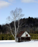 A Little Old Barn on a Snowy Day. On a snowy day during winter in Quebec, Canada, this a view of a little old barn sharing its space with a birch tree Royalty Free Stock Photos