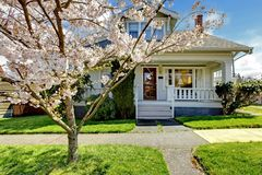 Little old cute house with a blooming cherry tree. Royalty Free Stock Images