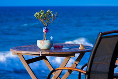 Little olive tree on the table against the sea Stock Photo