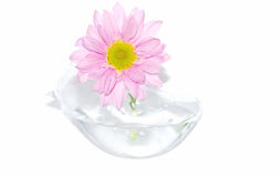 Little one pink  flower in small vase. Royalty Free Stock Image
