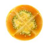 Little orange Stock Photography