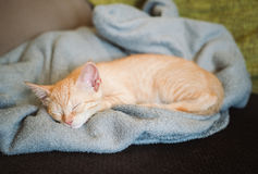 Little orange cat on the top of a couch Royalty Free Stock Photos