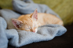 Little orange cat on the top of a couch Royalty Free Stock Image