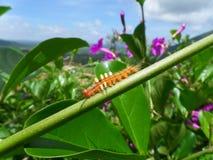 Little orange color caterpillar climbing on the green stalk Royalty Free Stock Image