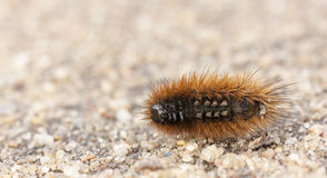 Little orange larva on the ground Stock Image