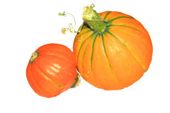 Little orange pumpkins isolated Royalty Free Stock Images