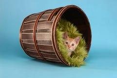 Free Little Orange Tabby Kitten In Studio Royalty Free Stock Photo - 32220305
