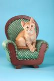 Little Orange Tabby Kitten in Studio Royalty Free Stock Photos