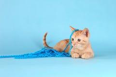 Little Orange Tabby Kitten in Studio Royalty Free Stock Photos