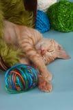 Little Orange Tabby Kitten in Studio Stock Images