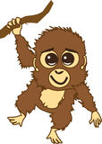 Little Orangutan Royalty Free Stock Photos