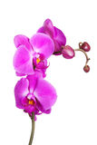 Little orchid Stock Photo